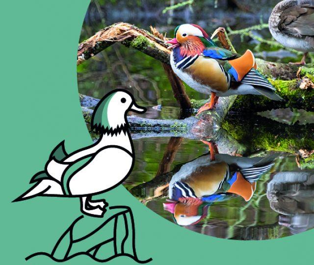 Categorie Waterbirds LQ
