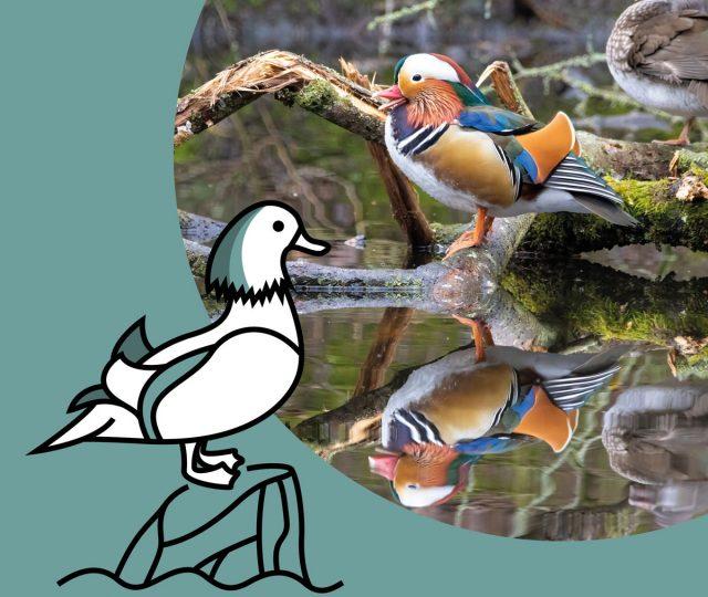Categorie-Watervogels-v1